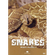 Wildlife Paradise - Snakes Alive (DVD)